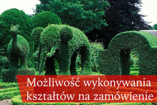topiary2 kopia
